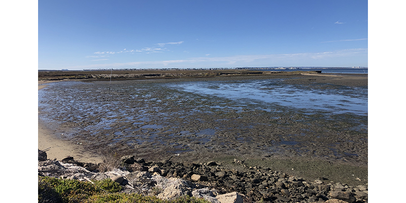 Native Oyster Living Shoreline Project awarded nearly $1 Million grant from U.S. Fish and Wildlife Service